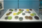Albany Airport Diatoms