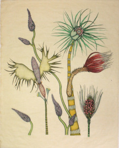Exotica Botanica State I Print 2