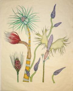 Exotica Botanica State I Print 2 Verso